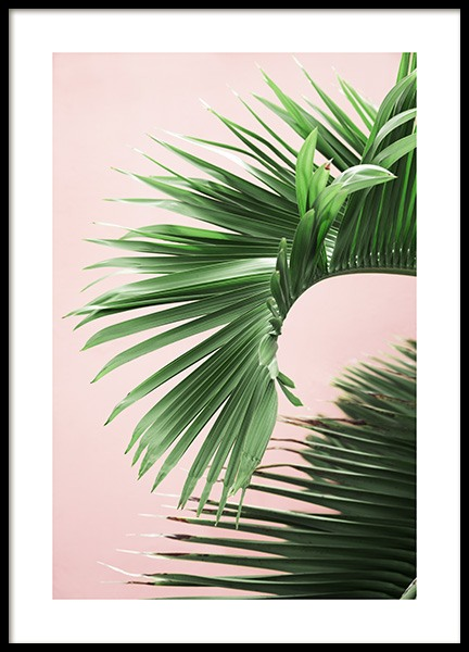 Pink and Green Palm No2 Juliste ryhmässä Julisteet  / Koot / 50x70 cm @ Desenio AB (10856)