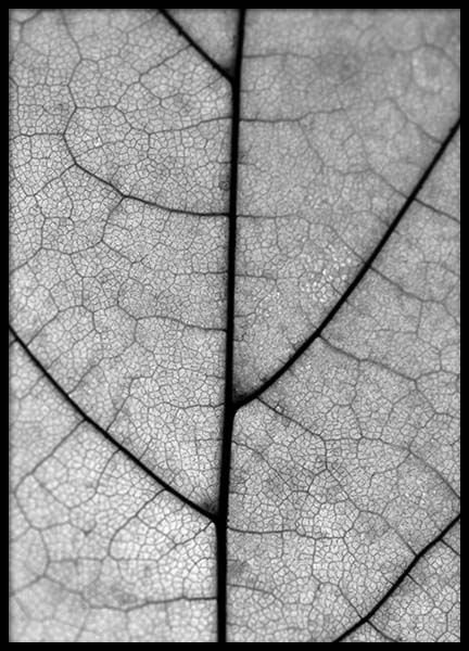 Leaf Close Up Juliste ryhmässä Julisteet  / Koot / 50x70 cm @ Desenio AB (3156)
