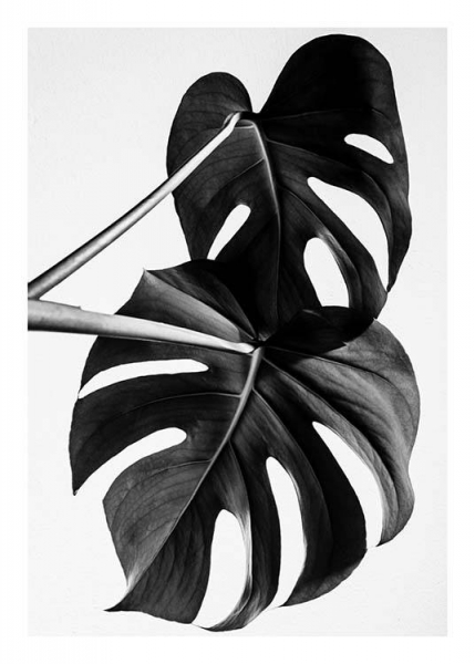 Monstera B&W Two Julisteet ryhmässä Julisteet  / Koot / 50x70 cm @ Desenio AB (8973)